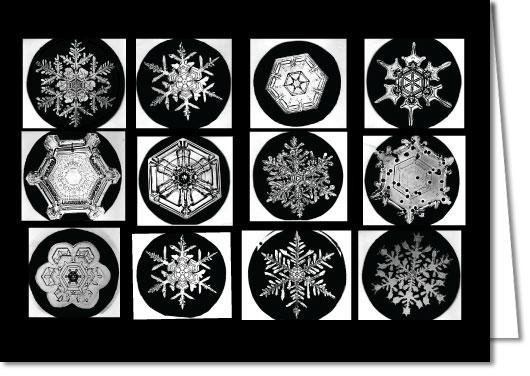 """Snowflakes"" image"