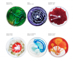 Petri dishes with colorful growths