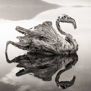 Calcified bird