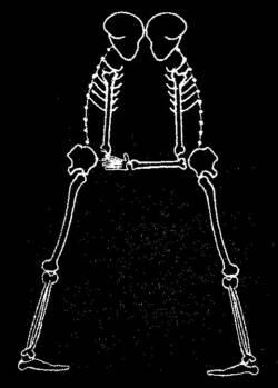 skeleton_Font_A