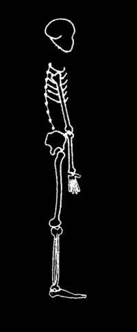skeleton_large_I