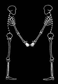 skeleton_large_M