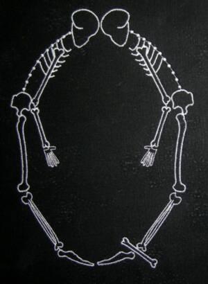 skeleton_large_Q
