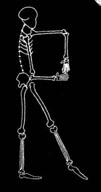 skeleton_large_R