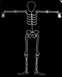 skeleton_large_T
