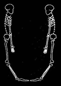 skeleton_large_U