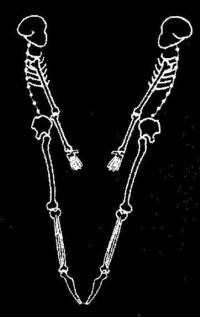 skeleton_large_V