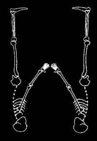 skeleton_large_W